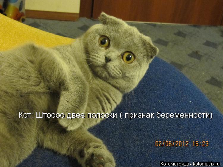 Котоматрица: Кот: Штоооо двее полоски ( признак беременности)