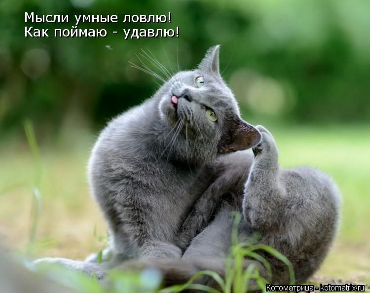 Котоматрица: Мысли умные ловлю! Как поймаю - удавлю!