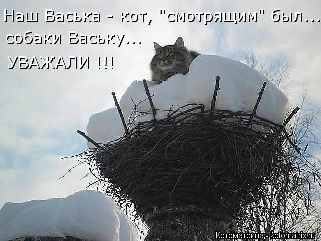 """Котоматрица: Наш Васька - кот, """"смотрящим"""" был... собаки Ваську... УВАЖАЛИ !!!"""