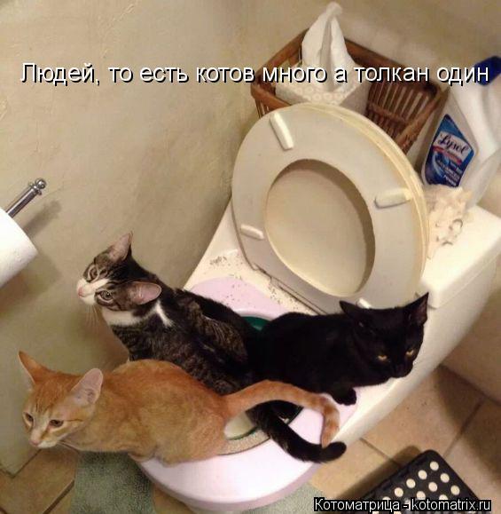 Котоматрица: Людей, то есть котов много а толкан один