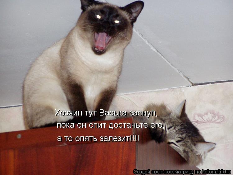 Котоматрица: Хозяин тут Васька заснул, пока он спит достаньте его, а то опять залезит!!!!
