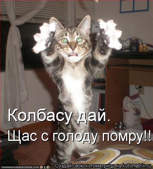 Котоматрица: Колбасу дай.  Колбасу дай.  Щас с голоду помру!!!