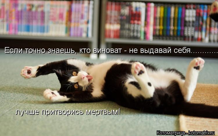 Котоматрица: Если точно знаешь, кто виноват - не выдавай себя................ лучше притворись мертвым!