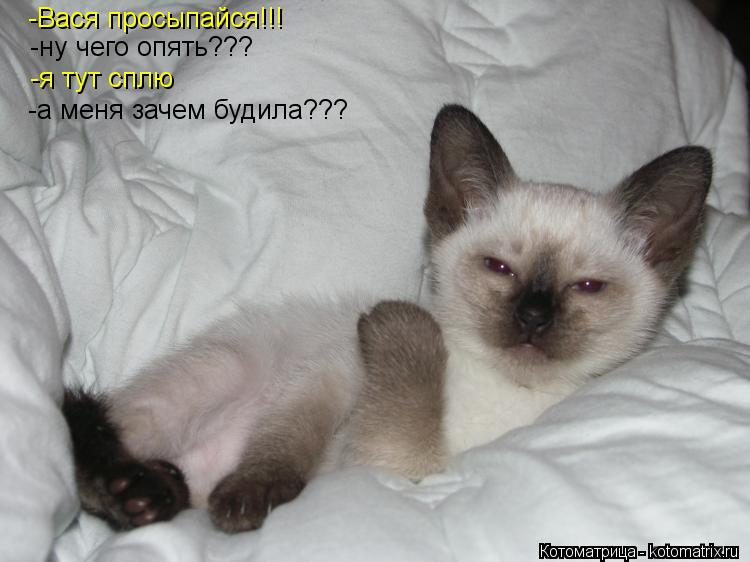 Котоматрица: -Вася просыпайся!!! -ну чего опять??? -я тут сплю -а меня зачем будила???