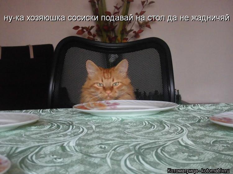 Котоматрица: ну-ка хозяюшка сосиски подавай на стол да не жадничяй