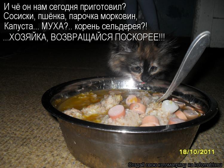 Котоматрица: И чё он нам сегодня приготовил? Сосиски, пшёнка, парочка морковин, Капуста... МУХА?.. корень сельдерея?! ...ХОЗЯЙКА, ВОЗВРАЩАЙСЯ ПОСКОРЕЕ!!!