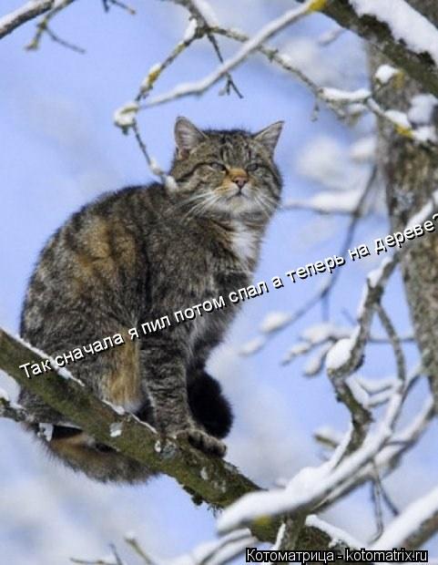 Котоматрица: Так сначала я пил потом спал а теперь на дереве?