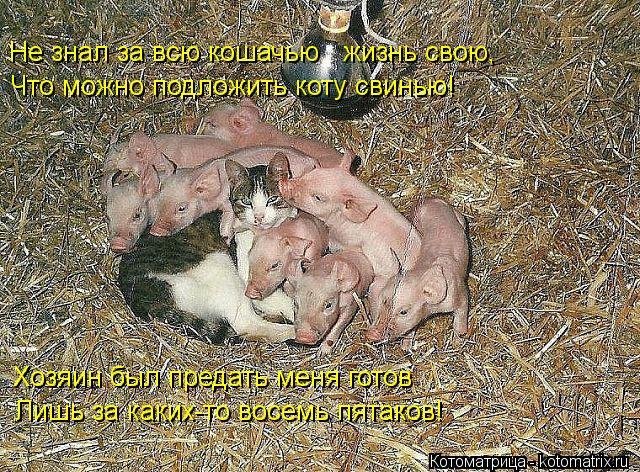 Котоматрица: Не знал за всю кошачью   жизнь свою, Что можно подложить коту свинью! Хозяин был предать меня готов Лишь за каких-то восемь пятаков!