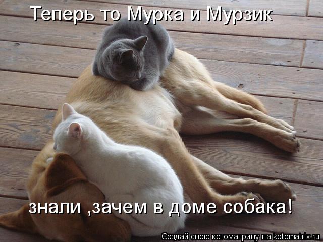 Котоматрица: Теперь то Мурка и Мурзик знали ,зачем в доме собака!