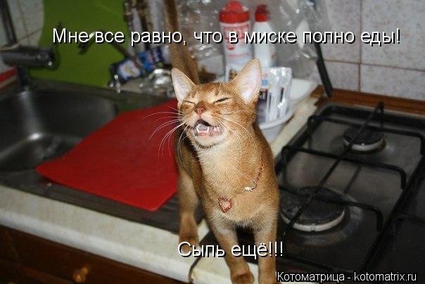 Котоматрица: Мне все равно, что в миске полно еды! Сыпь ещё!!!