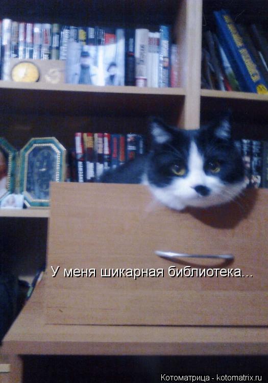 Котоматрица: У меня шикарная библиотека...