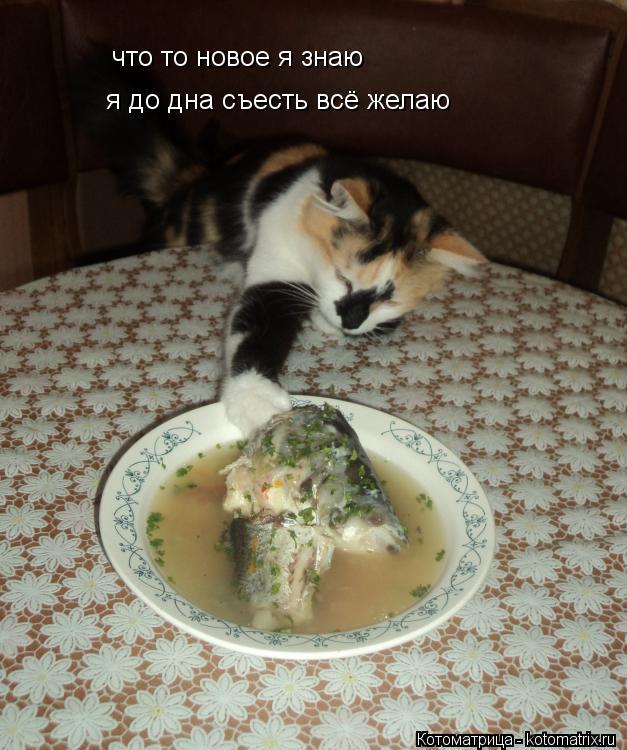 Котоматрица: что то новое я знаю я до дна съесть всё желаю