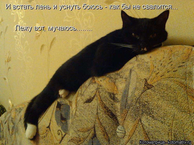 Котоматрица: И встать лень и уснуть боюсь - как бы не свалится... Лежу вот, мучаюсь........