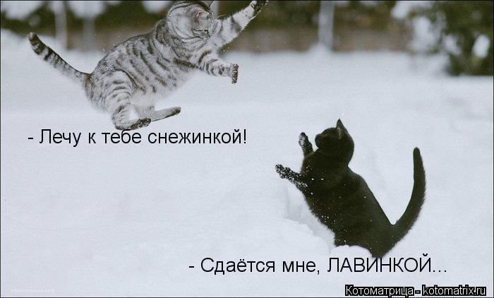 Котоматрица: - Лечу к тебе снежинкой! - Сдаётся мне, ЛАВИНКОЙ...