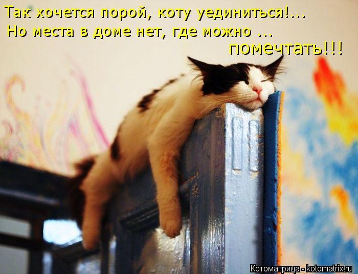 Котоматрица: Так хочется порой, коту уединиться!... Но места в доме нет, где можно ... помечтать!!!
