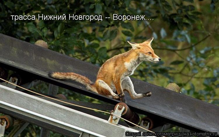 Котоматрица: трасса Нижний Новгород -- Воронеж....