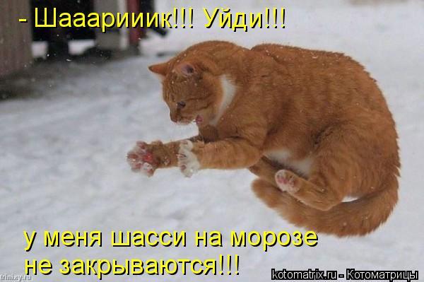 Котоматрица: - Шааарииик!!! Уйди!!! у меня шасси на морозе не закрываются!!!
