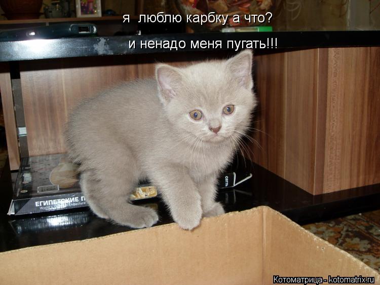 Котоматрица: я  люблю карбку а что? и ненадо меня пугать!!! и ненадо меня пугать!!!