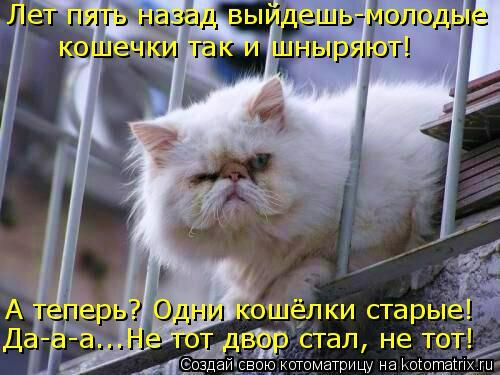 Котоматрица: А теперь? Одни кошёлки старые! Да-а-а...Не тот двор стал, не тот! Лет пять назад выйдешь-молодые  кошечки так и шныряют!