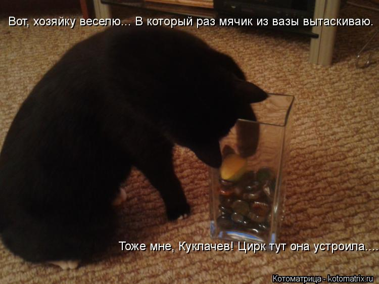 Котоматрица: Вот, хозяйку веселю... В который раз мячик из вазы вытаскиваю. Тоже мне, Куклачев! Цирк тут она устроила.....