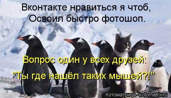 """Котоматрица: Вконтакте нравиться я чтоб, Освоил быстро фотошоп. Вопрос один у всех друзей: """"Ты где нашёл таких мышей?!"""""""