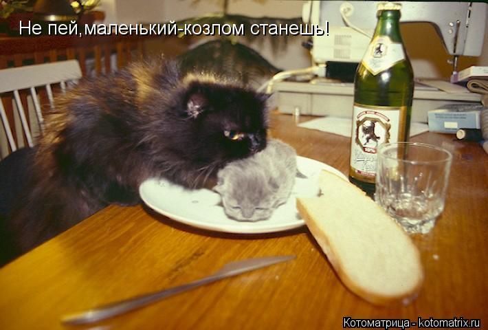 Котоматрица: Не пей,маленький-козлом станешь!