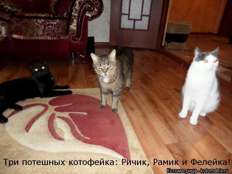 Котоматрица: Три потешных котофейка: Ричик, Рамик и Фелейка!
