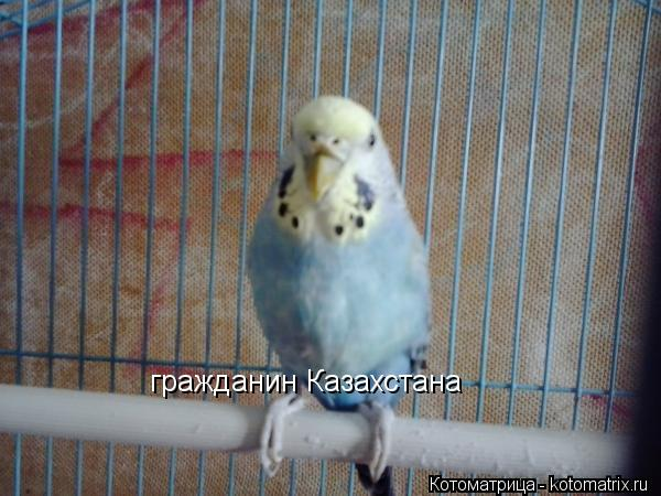Котоматрица: гражданин Казахстана