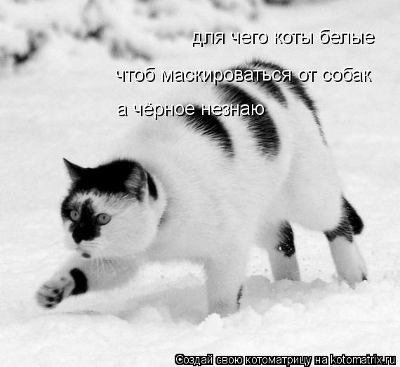 Котоматрица: для чего коты белые чтоб маскироваться от собак а чёрное незнаю