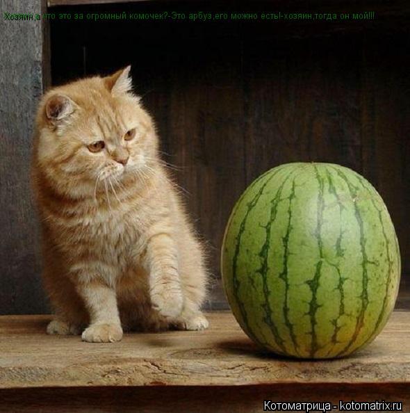 Котоматрица: Хозяин,а что это за огромный комочек? Хозяин,а что это за огромный комочек?-Это арбуз,его можно есть!-хозяин,тогда он мой!!! Хозяин,а что это за