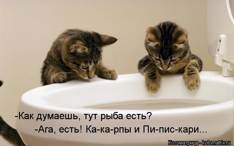 Котоматрица: -Как думаешь, тут рыба есть? -Ага, есть! Ка-ка-рпы и Пи-пис-кари...