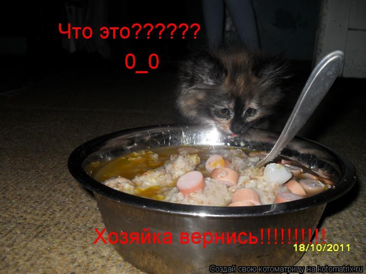 Котоматрица: Что это?????? 0_0 Хозяйка вернись!!!!!!!!!!