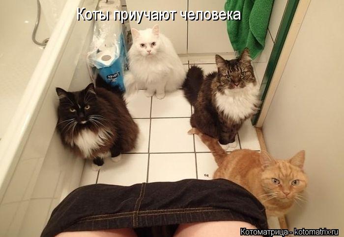Котоматрица: Коты приучают человека