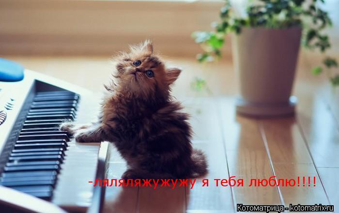 Котоматрица: -ляляляжужужу я тебя люблю!!!!