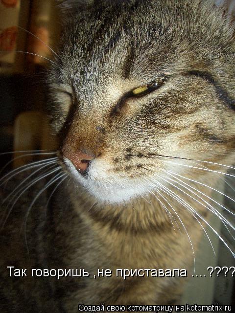 Котоматрица: Так говоришь ,не приставала ....????