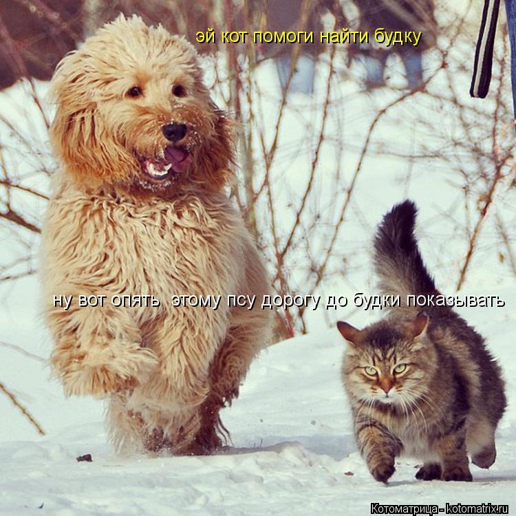 Котоматрица: ну вот опять  этому псу дорогу до будки показывать эй кот помоги найти будку