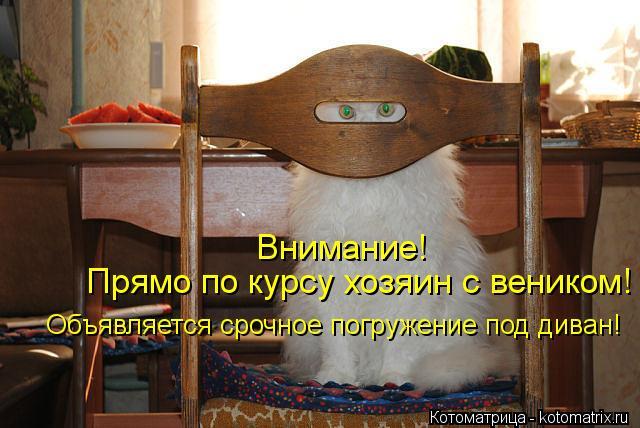 Котоматрица: Внимание! Прямо по курсу хозяин с веником! Объявляется срочное погружение под диван!