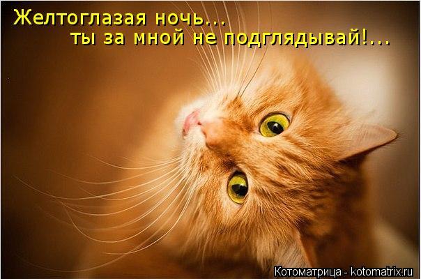 Котоматрица: Желтоглазая ночь... ты за мной не подглядывай!...