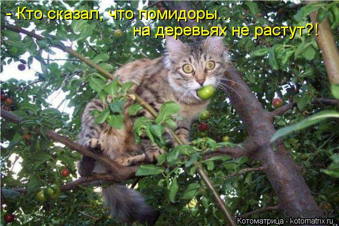 Котоматрица: - Кто сказал, что помидоры... на деревьях не растут?!