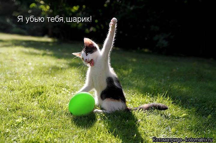 Котоматрица: Я убью тебя,шарик!