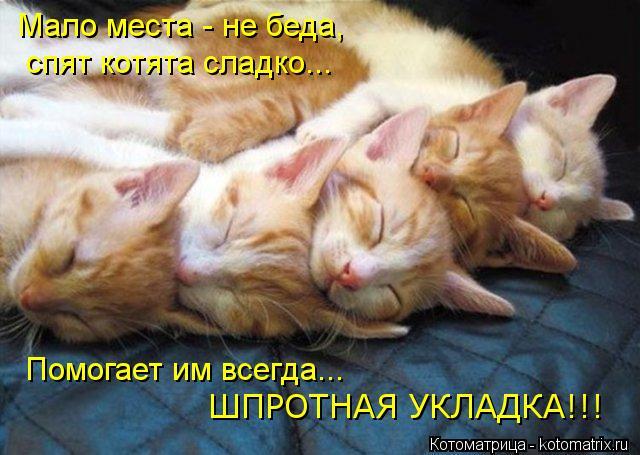 Котоматрица: Мало места - не беда, спят котята сладко... Помогает им всегда... ШПРОТНАЯ УКЛАДКА!!!