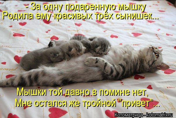 """Котоматрица: - За одну подаренную мышку Родила ему красивых трёх сынишек... Мышки той давно в помине нет, Мне остался же тройной """"привет""""..."""