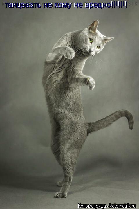 Котоматрица: танцевать не ко танцевать не ком танцевать не кому не вредно!!!!!!! танцевать не кому не вредно!!!!!!!
