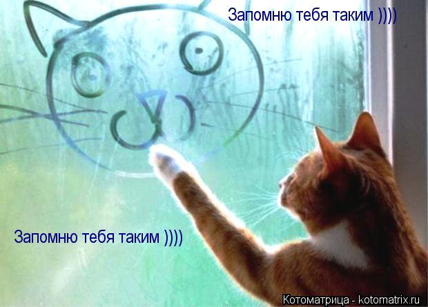 Котоматрица: Запомню тебя таким )))) Запомню тебя таким ))))