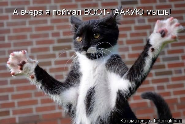 Котоматрица: А вчера я поймал ВООТ-ТААКУЮ мышь!