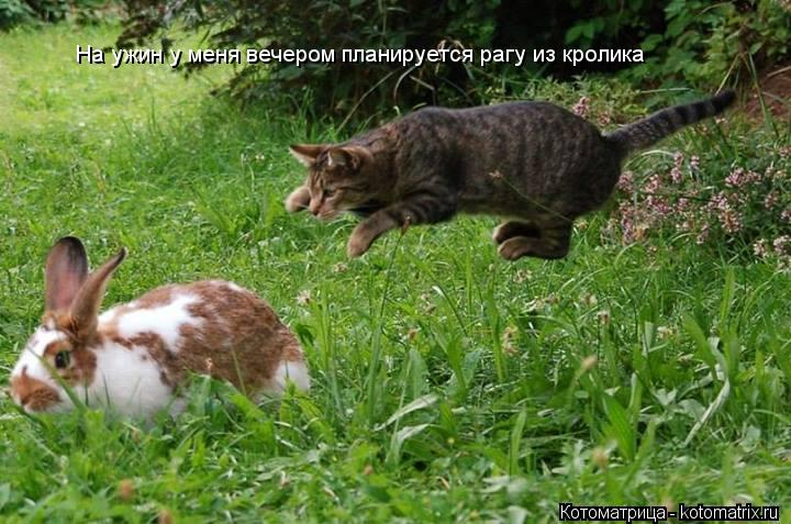 Котоматрица: На ужин у меня вечером планируется рагу из кролика