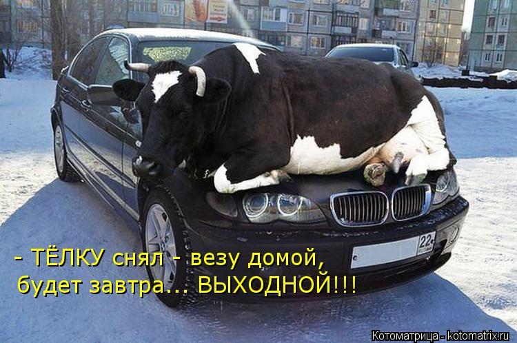 Котоматрица: - ТЁЛКУ снял - везу домой, будет завтра... ВЫХОДНОЙ!!!