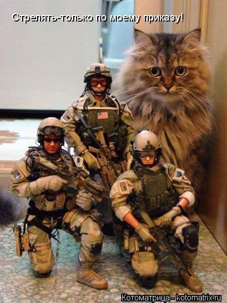 Котоматрица: Стрелять-только по моему приказу!