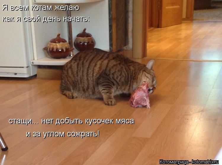 Котоматрица: Я всем котам желаю как я свой день начать: стащи... нет добыть кусочек мяса и за углом сожрать!