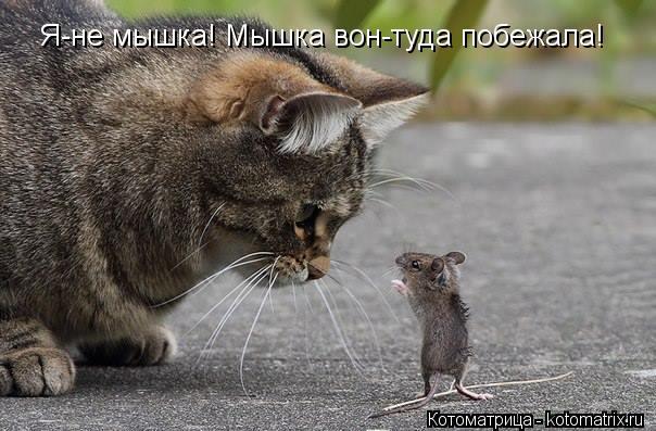 Котоматрица: Я-не мышка! Мышка вон-туда побежала!